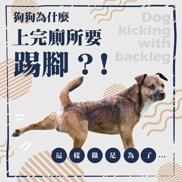 【狗狗為什麼上完廁所